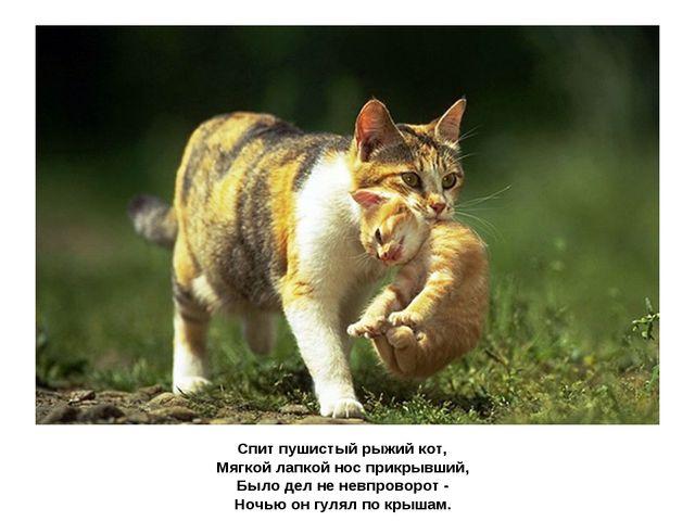 Спит пушистый рыжий кот, Мягкой лапкой нос прикрывший, Было дел не невпроворо...