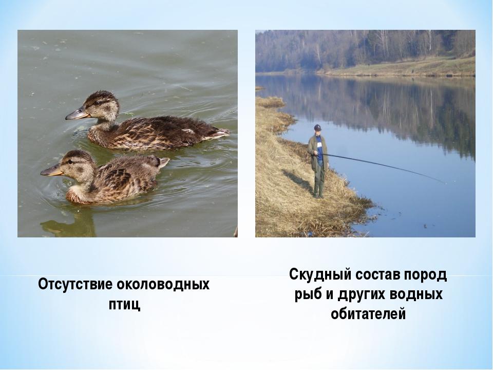 Отсутствие околоводных птиц Скудный состав пород рыб и других водных обитателей