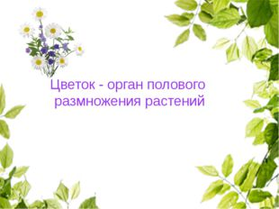 Цветок - орган полового размножения растений