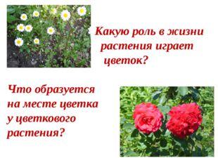 Какую роль в жизни растения играет цветок? Что образуется на месте цветка у