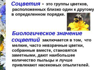 Соцветия - это группы цветков, расположенных близко один к другому в определе