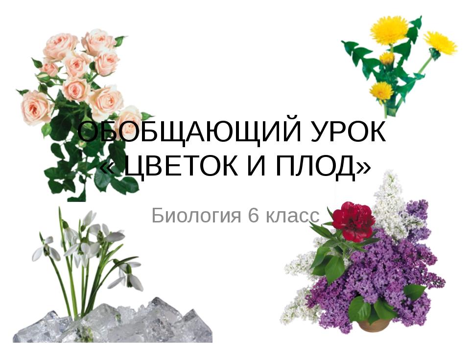 ОБОБЩАЮЩИЙ УРОК « ЦВЕТОК И ПЛОД» Биология 6 класс
