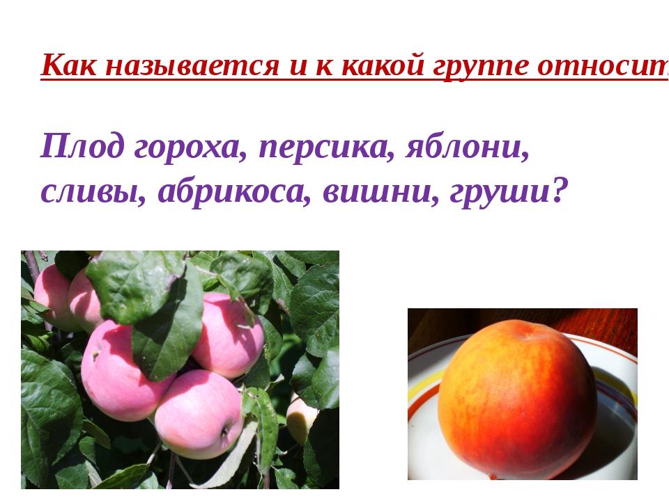 Как называется и к какой группе относится? Плод гороха, персика, яблони, слив...