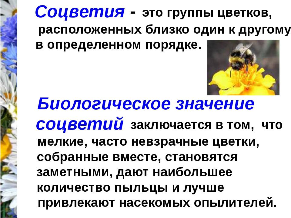 Соцветия - это группы цветков, расположенных близко один к другому в определе...