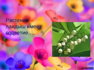 Растение ландыш имеет соцветие…. Кисть