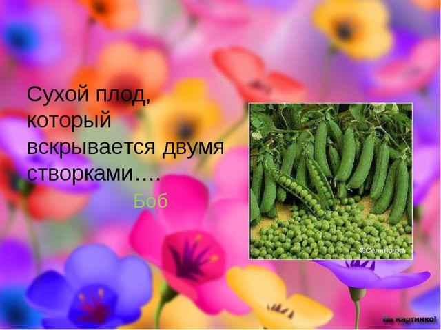 Сухой плод, который вскрывается двумя створками…. Боб