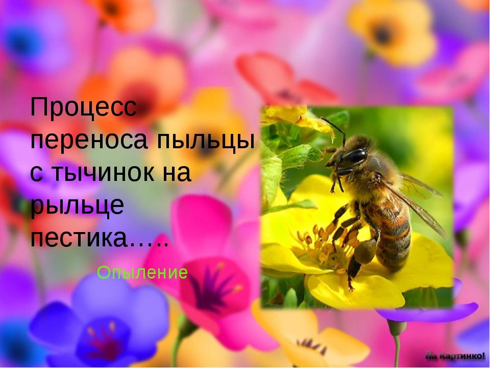 Процесс переноса пыльцы с тычинок на рыльце пестика….. Опыление