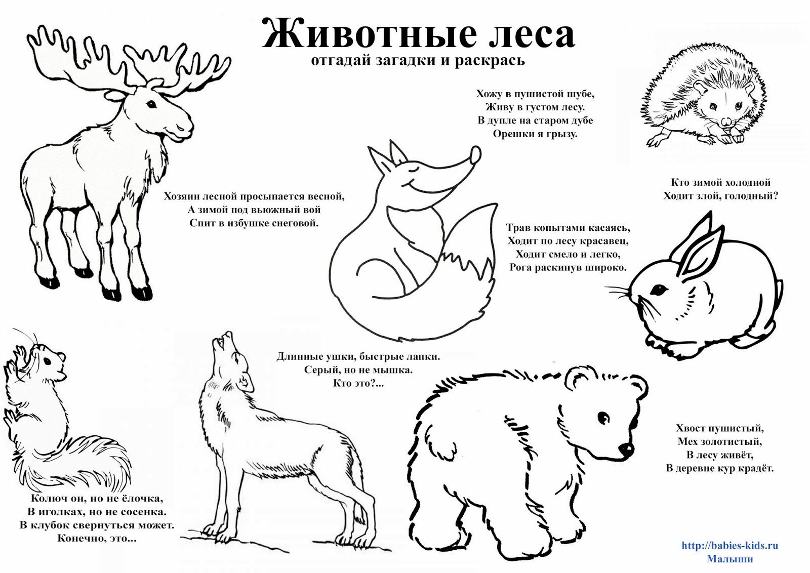 Раскраски животные нашего леса