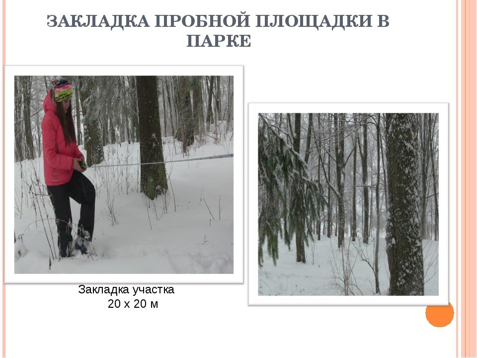 ЗАКЛАДКА ПРОБНОЙ ПЛОЩАДКИ В ПАРКЕ Закладка участка 20 x 20 м