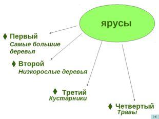 ярусы Первый Самые большие деревья Второй Низкорослые деревья Третий Кустарни
