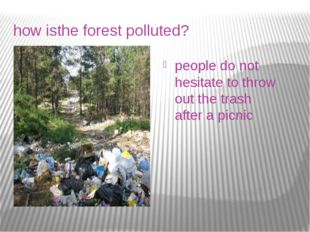 how isthe forest polluted? people do not hesitate to throw out the trash afte