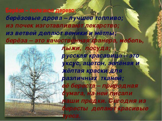 Берёза – полезное дерево: берёзовые дрова – лучшее топливо; из почек изготавл...