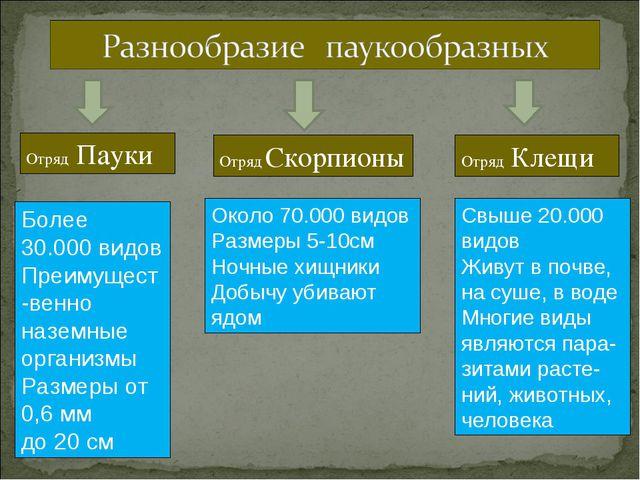 Отряд Пауки Отряд Скорпионы Отряд Клещи Более 30.000 видов Преимущест-венно н...