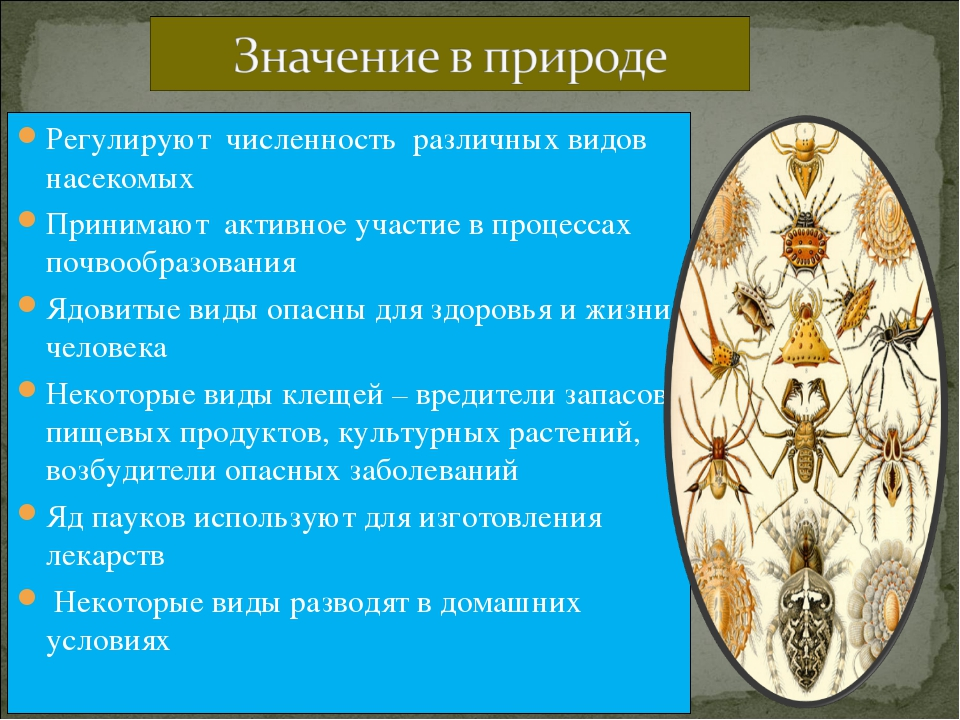 Регулируют численность различных видов насекомых Принимают активное участие в...