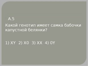 А.5 Какой генотип имеет самка бабочки капустной белянки? 1) XY2) Х03) XX4