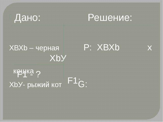 Дано: Решение: ХВХb – черная Р: ХВХb х ХbУ кошка ХbУ- рыжий кот G: F1 - ? F1: