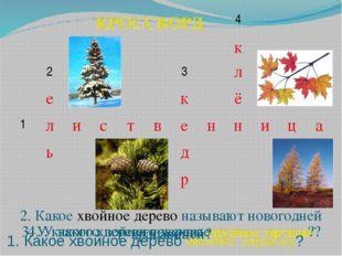 3. У какого хвойного дерева вкусные орешки? 4. У какого дерева красивые резны