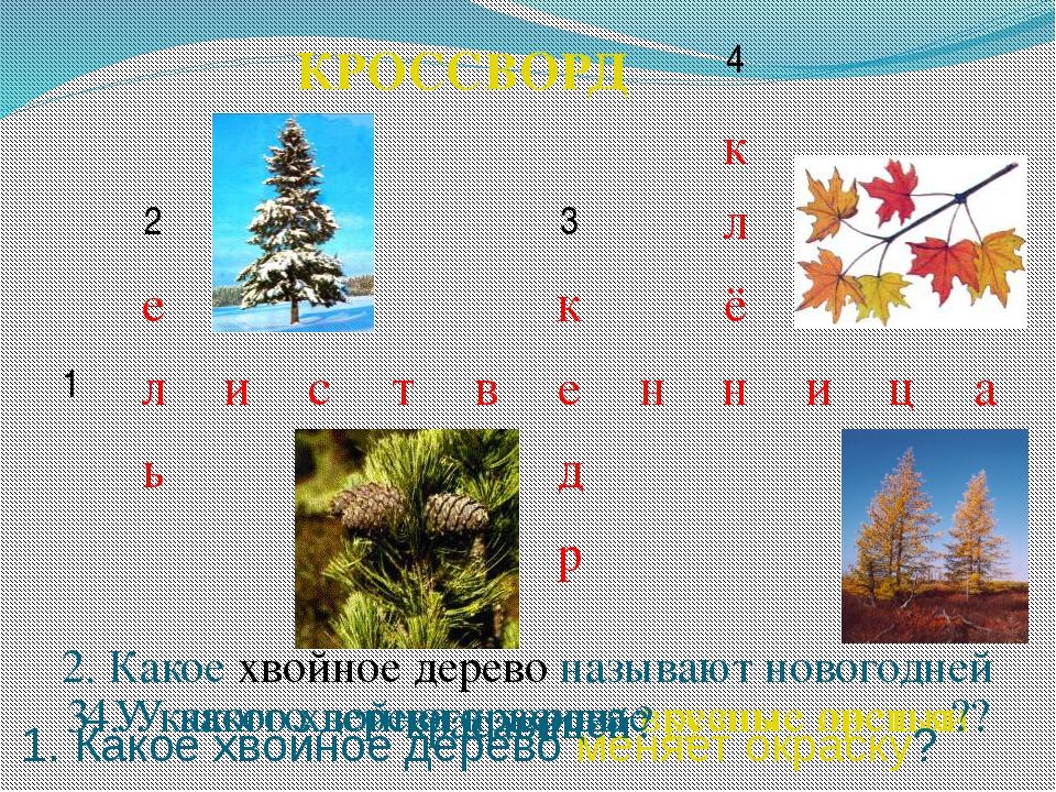 3. У какого хвойного дерева вкусные орешки? 4. У какого дерева красивые резны...