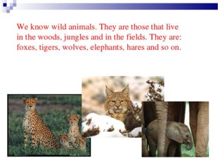 We know wild animals. They are those that live in the woods, jungles and in