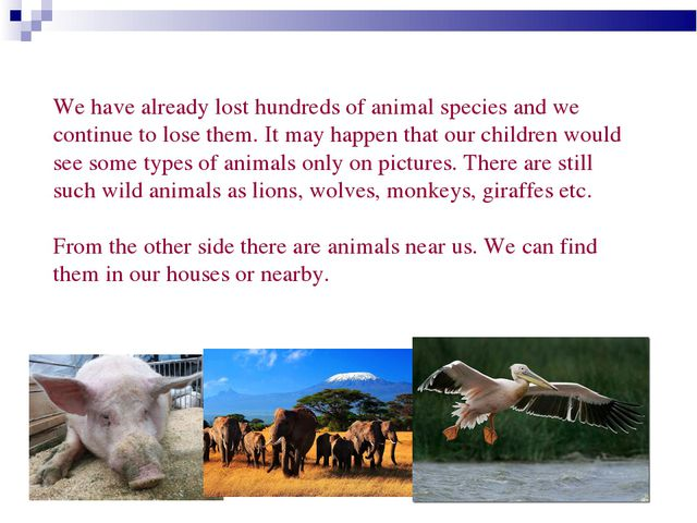 We have already lost hundreds of animal species and we continue to lose them...