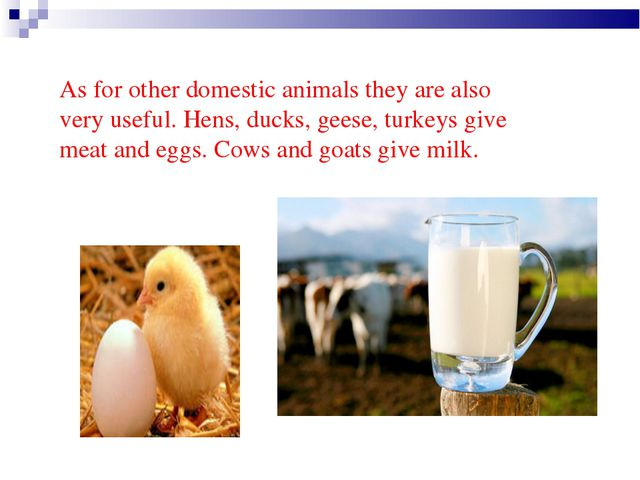 As for other domestic animals they are also very useful. Hens, ducks, geese,...