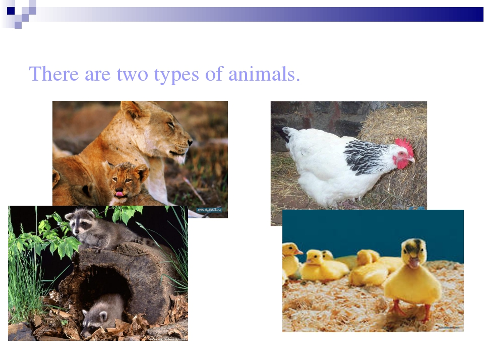 There are two types of animals.