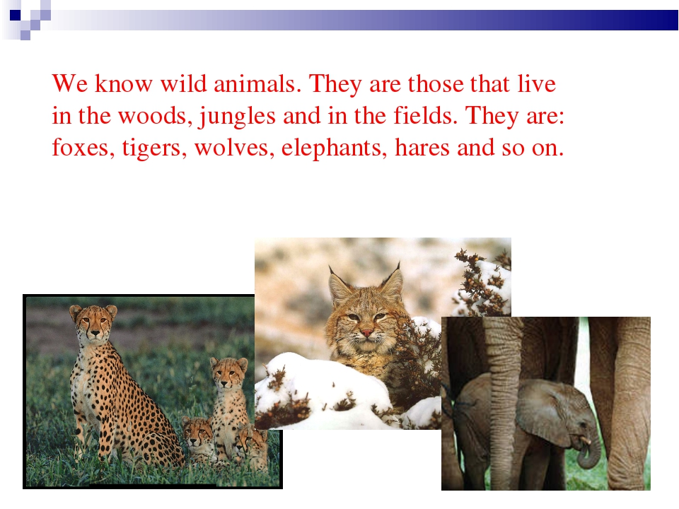 We know wild animals. They are those that live in the woods, jungles and in...