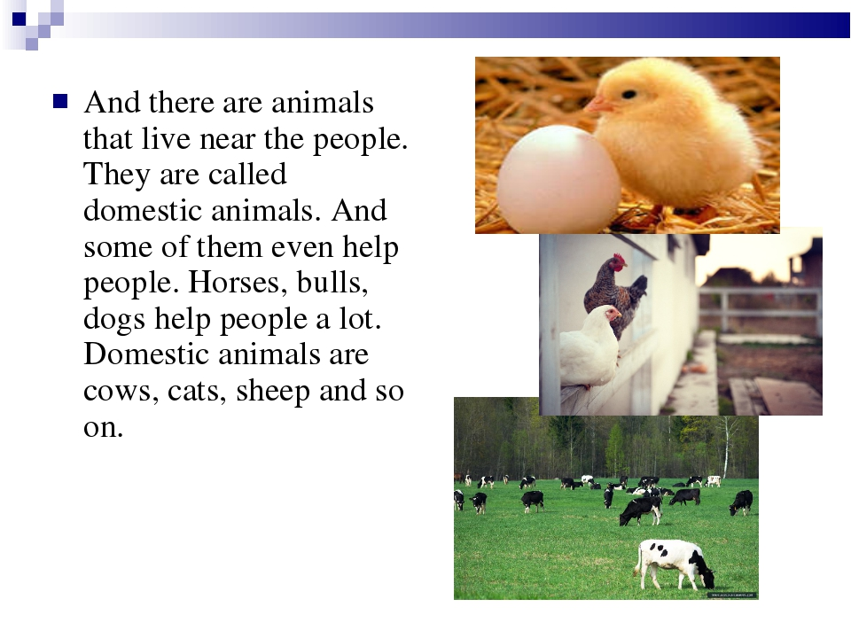 And there are animals that live near the people. They are called domestic ani...