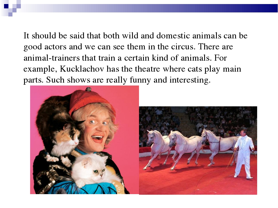 It should be said that both wild and domestic animals can be good actors and...