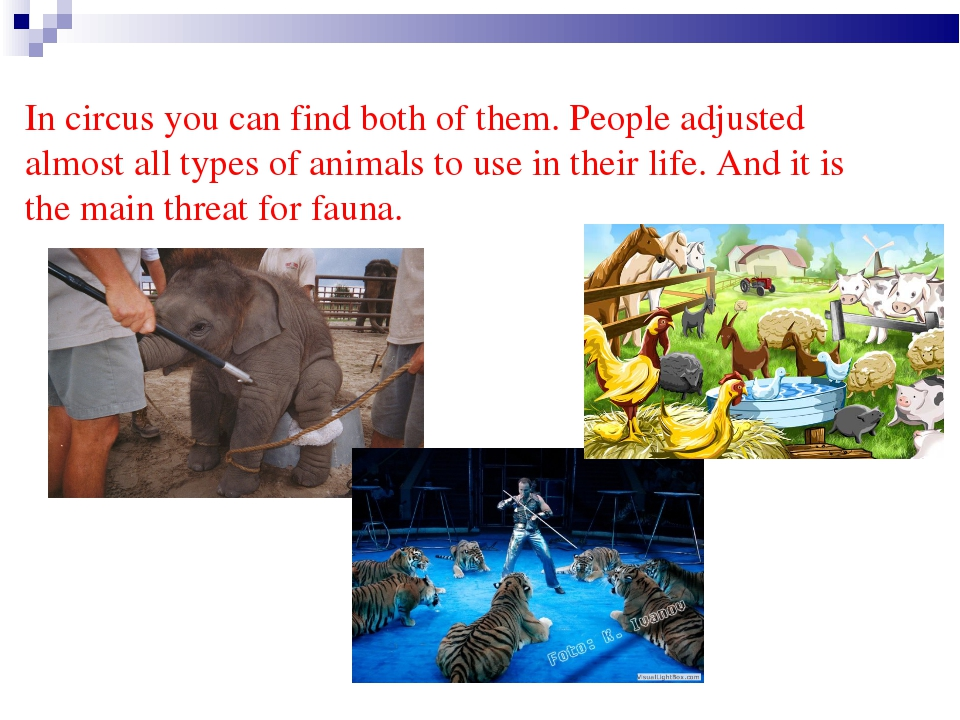 In circus you can find both of them. People adjusted almost all types of anim...
