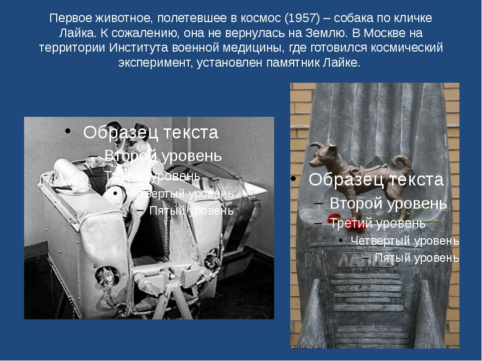 Первое животное, полетевшее в космос (1957) – собака по кличке Лайка. К сожал...