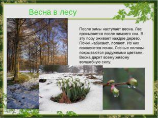 Весна в лесу После зимы наступает весна. Лес просыпается после зимнего сна. В