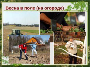 Весна в поле (на огороде)