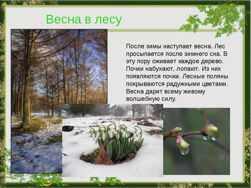 Весна в лесу После зимы наступает весна. Лес просыпается после зимнего сна. В...