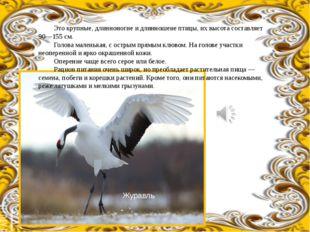 Это крупные, длинноногие и длинношеие птицы, их высота составляет 90—155 см.