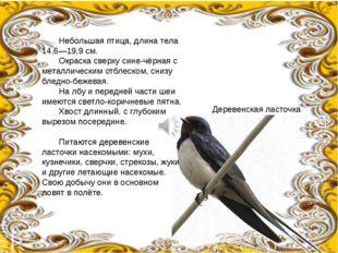 Небольшая птица, длина тела 14,6—19,9см. Окраска сверху сине-чёрная с мета