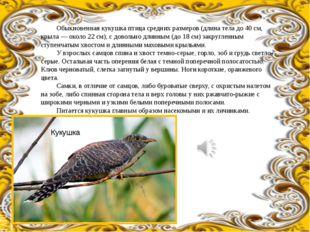Обыкновенная кукушка птица средних размеров (длина тела до 40 см, крыла — ок