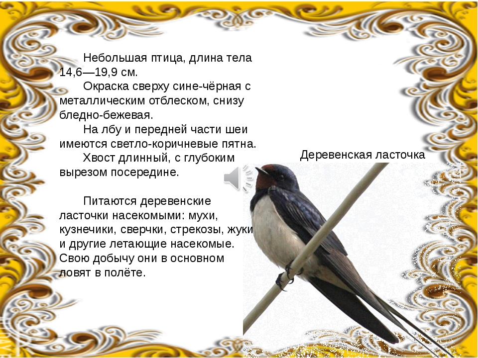Небольшая птица, длина тела 14,6—19,9см. Окраска сверху сине-чёрная с мета...