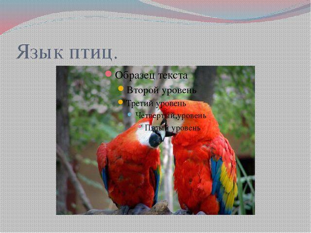 Язык птиц.
