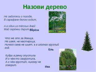 Назови дерево Не заботясь о погоде, В сарафане белом ходит, А в один из тёплы