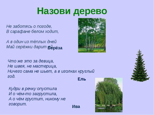 Назови дерево Не заботясь о погоде, В сарафане белом ходит, А в один из тёплы...