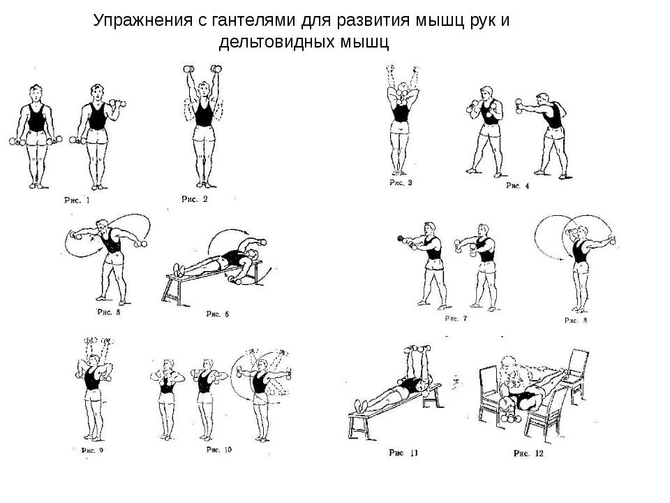 Упражнения для гантелей с картинками