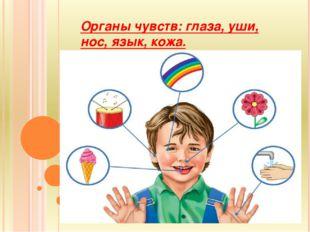 Органы чувств: глаза, уши, нос, язык, кожа.