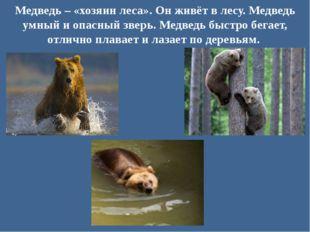 Медведь – «хозяин леса». Он живёт в лесу. Медведь умный и опасный зверь. Медв
