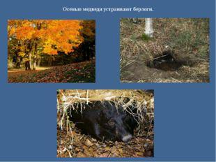 Осенью медведи устраивают берлоги.
