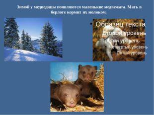 Зимой у медведицы появляются маленькие медвежата. Мать в берлоге кормит их мо