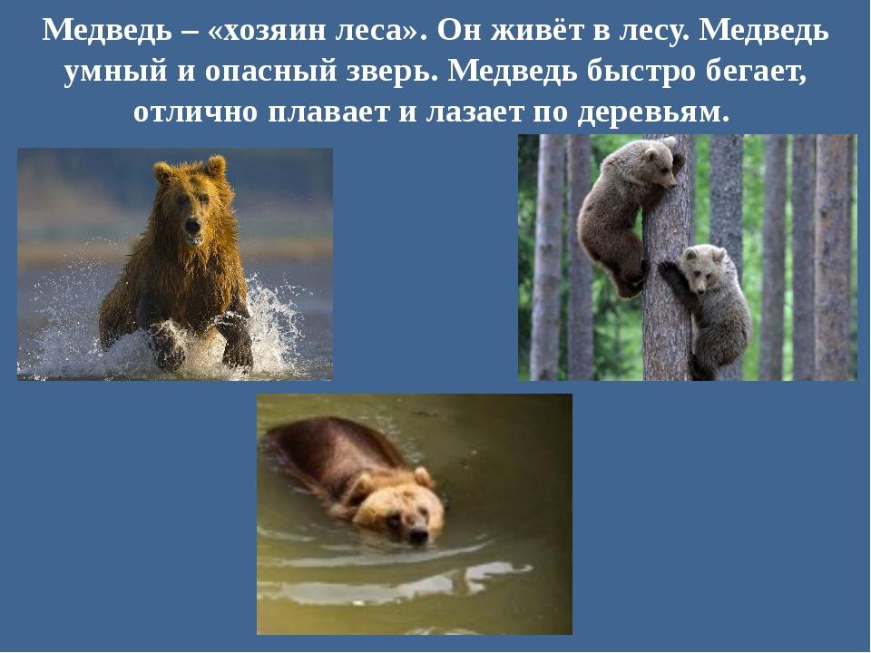 Медведь – «хозяин леса». Он живёт в лесу. Медведь умный и опасный зверь. Медв...