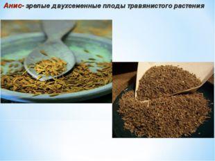 Анис- зрелые двухсеменные плоды травянистого растения
