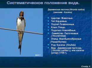 Царство: Животные. Тип Хордовые. Подтип Позвоночные Класс Птицы. Подкласс Но