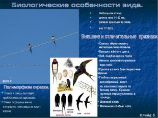 Небольшая птица длина тела 14-20 см, размах крыльев 32-34см. вес 17-20гр Сла